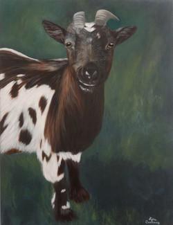 Le chèvre de Landal