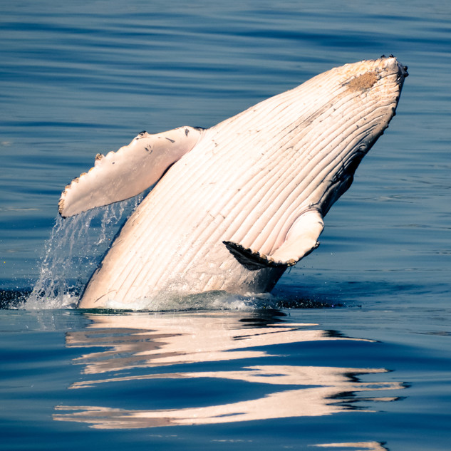 whale-showing-off.jpeg