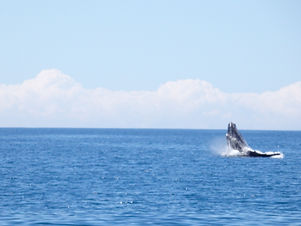 noosa whale watching tour
