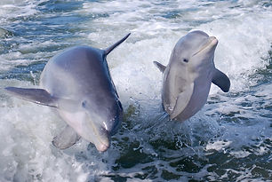 noosa-wild-dolphin-safari.jpg