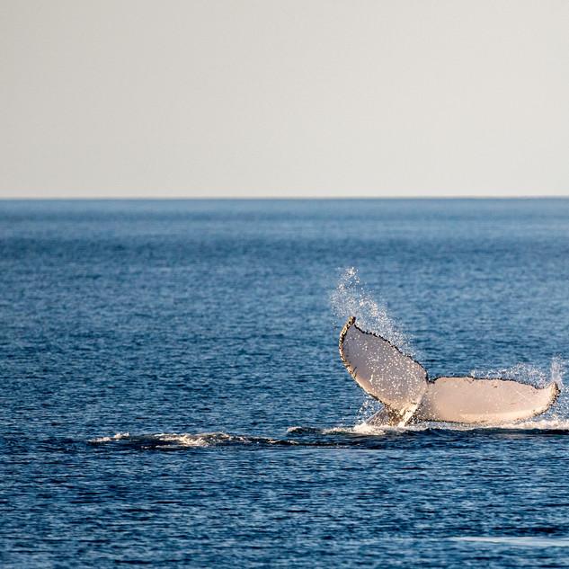 Whale-watching-tour-noosa.jpeg
