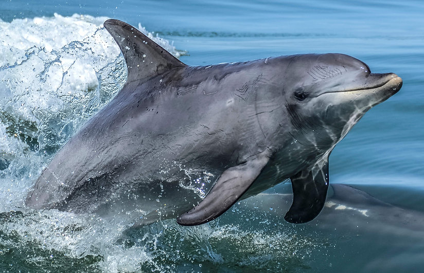 dolphin-tour-noosa.jpg