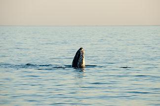 noosa-whale-watching-sunset.jpeg