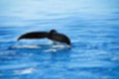 noosa-whales.jpeg