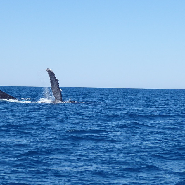 whale-waving.JPG