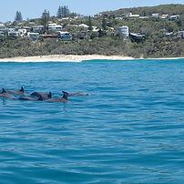 dolphins-sunshine-beach.jpg