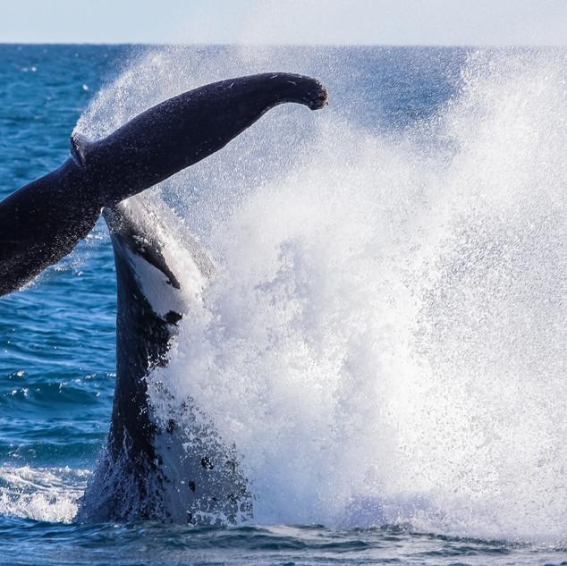 noosa-whale-watching-centre.jpeg