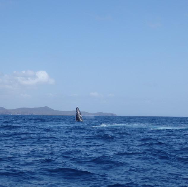 whale-spy-hopping.JPG