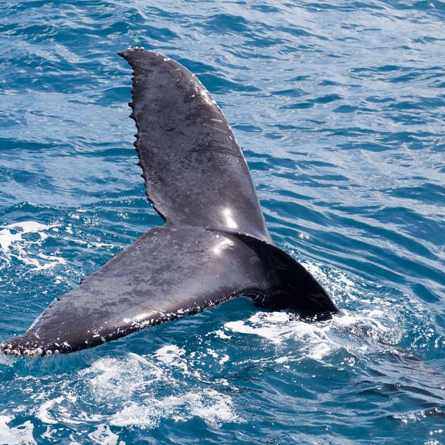 whale-tail.jpeg