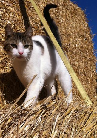 cat TL shot.jpg