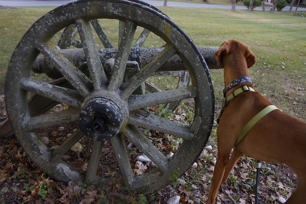 Chesky checking out some Civil War memorabilia