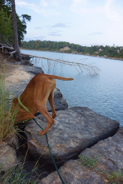 Alabama: hunting for chipmunks
