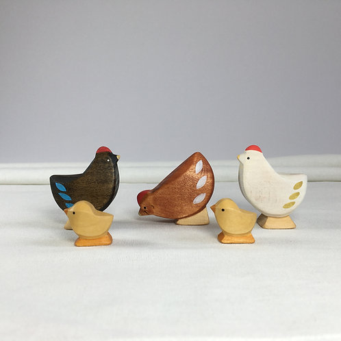 Brin d'Ours - Chicken Family3