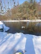 Wild Berry Farm Lake Winter