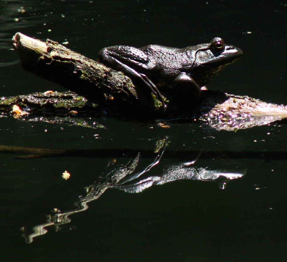 Bullfrog 1_Upper Pond_6115-3.jpg