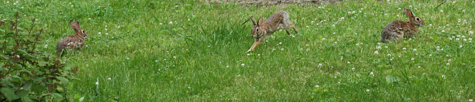 Young%20Cottontails_5377-Ed-WIB_edited.j