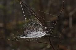 4-Unidentified cobweb spider web_3657.jp