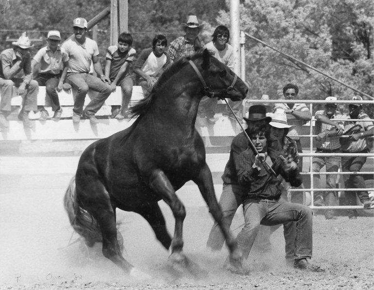 Wild Horse Race.jpg