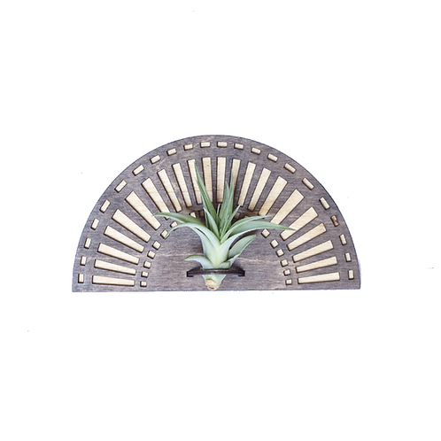 Sunrise Air Plant Wall Hanger