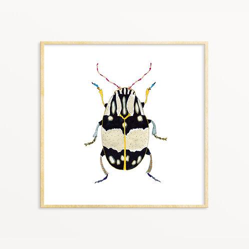 Beetle #12 Print