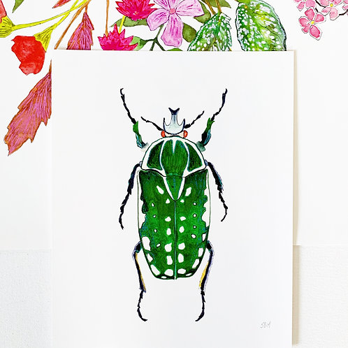 Beetle #6 Print
