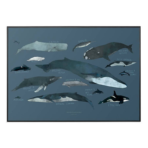 """Whales Chart 12"""" x 18"""""""
