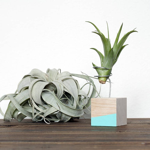 Cube Air Plant Stand