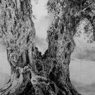 Tree of Life 1984
