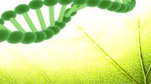 Beauty of Plant Stem Cells