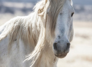 Wild Horses and Wild Eye
