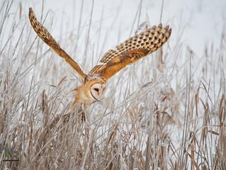 2019 Audubon Society Calendar