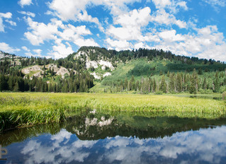 Silver Lake Reflections, 2016