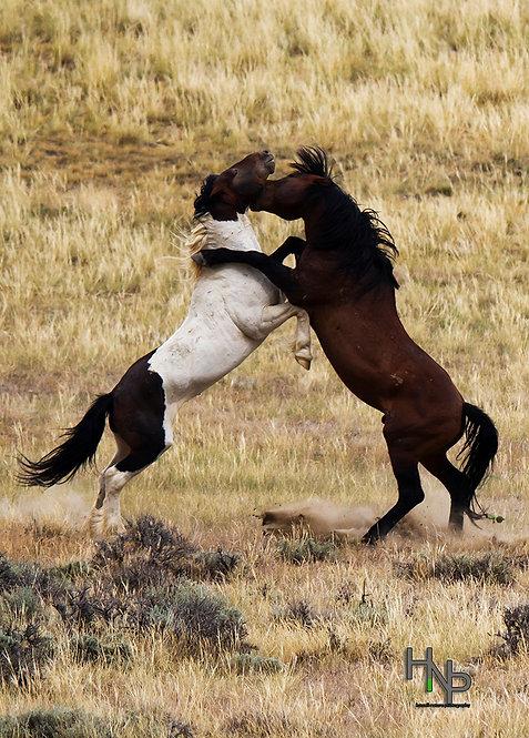 Confrontation