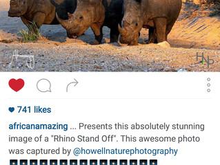 Rhino Stand Off, 2015