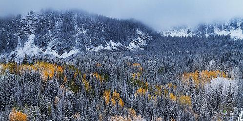Autumn's Frost