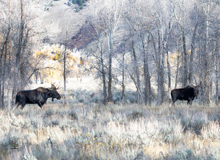 October in the Tetons and Yellowstone