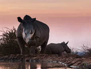 Finalist for #rememberingrhinos