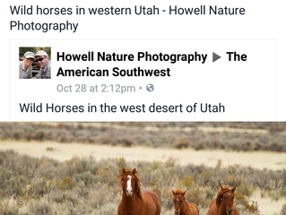 Wild Horses, 2016
