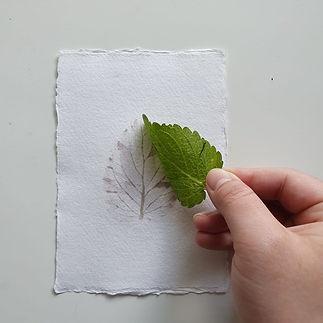 Lemon Blam Leaf Print