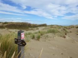 dune-du-perroquet-oct2013-75-