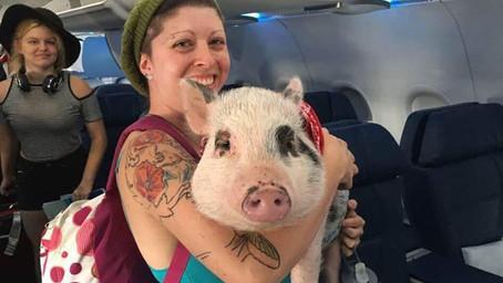 Finalmente pasó: Alaska Airlines prohíbe los animales de apoyo emocional en sus vuelos