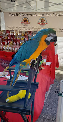 ARCHIE MACAW PARROT PIC 1.jpg