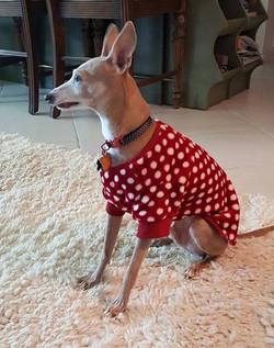 logan greyhound cropped
