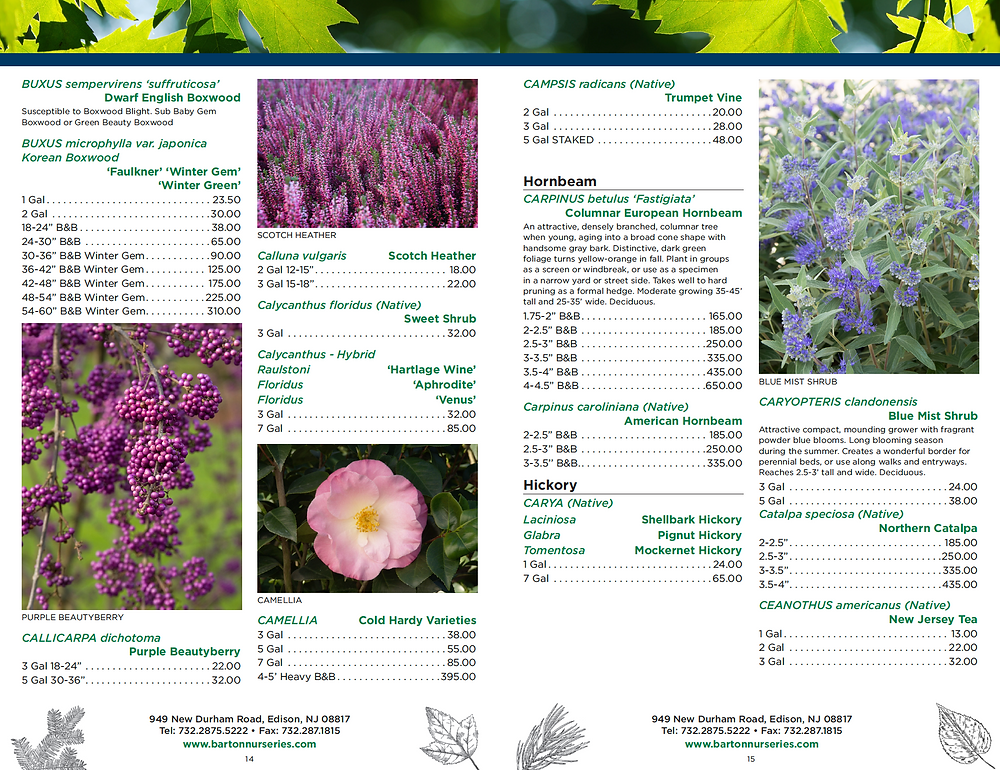 Plant Nursery Catalog Designer - Trees and Shrubs