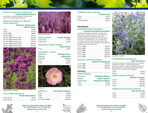 Plant Nursery Catalog Designer - Trees and Shrubs
