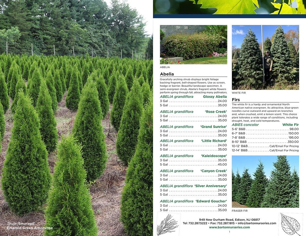 Tree Nursery Catalog Designer for Barton Nurseries in New Jersey