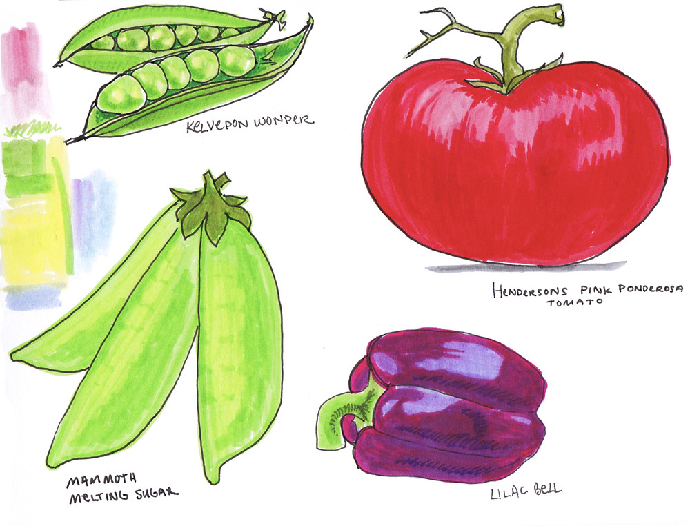 Vegetable Garden Illustration - Snap peas, Heirloom Tomatoes, Bell Peppers by Idelle Fisher