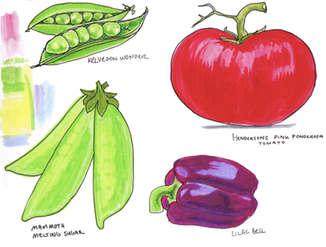 Vegetables Illustration by Idelle Fisher