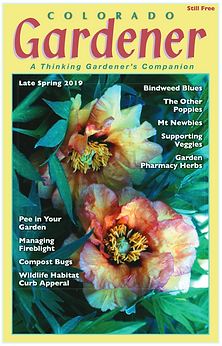 Editor's Letter: May 2019