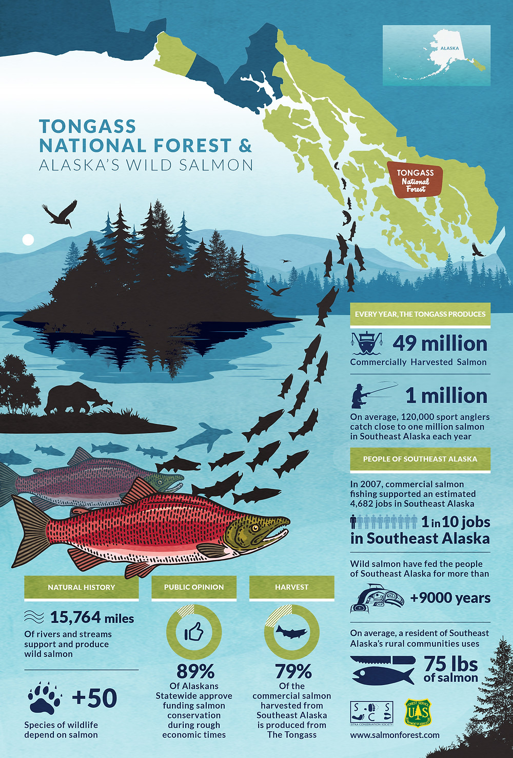 Infographic Design for Salmon Forest Conservation Film Documentary